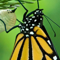 Monarch Transformation for a Print Shop Management System
